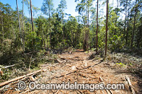 NSW Forest Logging Photo - Gary Bell