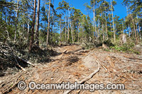 Boambee State Forest Logging Photo - Gary Bell