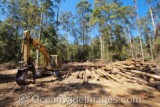 Logging dump site showing harvested trees and heavy machinery used to harvest the trees in the Boambee State Forest. Boambee, near Coffs Harbour, New South Wales, Australia. January, 2012. Photo - Gary Bell