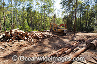 Logging Dump Site Photo - Gary Bell