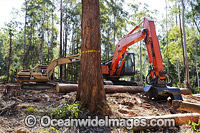 Harvested Trees and Machinery Photo - Gary Bell