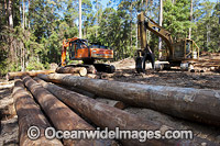 Logging Dump Site photo