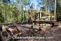 Logging harvested trees photo