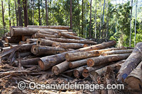 Forest Logging Australia Photo - Gary Bell