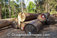 Logging Dump Site Australia photo
