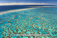 Wistari Reef Lagoon and Heron Island Photo - Gary Bell