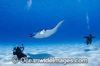 Reef Manta Ray and Diver Photo - Karen Willshaw