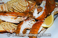 Balmain Bug Seafood stock photo
