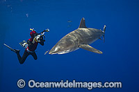 Diver photographing Oceanic Whitetip Shark