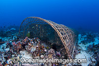 Traditonal Fish trap Philippines image