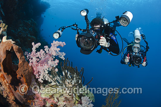 diver-photographing-coral-reef-70M0822-18 - The wonderful world of coral reefs  - Science and Research