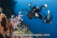 Diver photographing coral reef Photo - David Fleetham