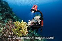 Diver photographing Crinoid Photo - David Fleetham