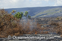 Lava flowing from Volcano Photo - David Fleetham