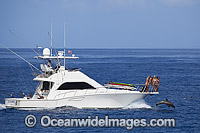 Gamefishing Boat with Dolphin at bow stock photo