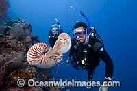 Chambered Nautilus with Divers stock photo