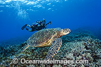 Diver photographing Turtles photo