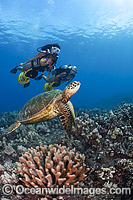 Green Sea Turtles and Divers Photo - David Fleetham