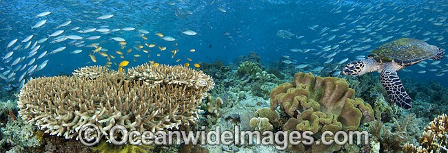 Colorful coral reef scene photo