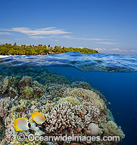 Fish and coral Philippines Photo - David Fleetham