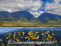Colorful fish and Island Photo - David Fleetham