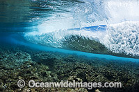 Breaking wave over reef Photo - David Fleetham