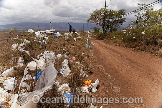 Scrubs and trees filled with plastic bags, down wind from a landfill site on the island of Maui, Hawaii. A state wide ban on plastic bags went into effect in January 2011. Hawaii, USA. Photo - David Fleetham