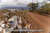 Scrubs and trees filled with plastic bags, down wind from a landfill site on the island of Maui, Hawaii. A state wide ban on plastic bags went into effect in January 2011. Hawaii, USA. Photo: David Fleetham