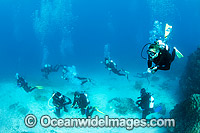 Divers exploring Great Barrier Reef photo
