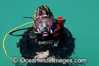 Diver with communications mask photo