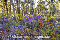 Wildflowers Victoria Photo - Gary Bell