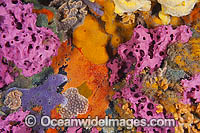 Sponges and Bryozoans on Pylon Photo - Gary Bell
