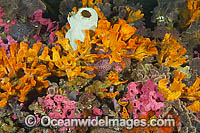 Sponges Tunicates and Bryozoans on Pylon Photo - Gary Bell