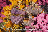 Temperate Reef South Australia Photo - Gary Bell