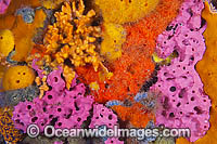 Sponges and Tunicates on Pylon Photo - Gary Bell