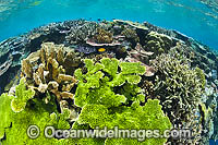 Coral Reef Papua New Guinea Photo - Gary Bell