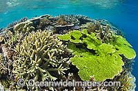 Underwater Coral Reef Photo - Gary Bell