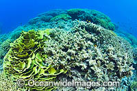 Milne Bay Coral Reef Photo - Gary Bell