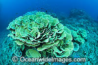 Coral Reef Seascape Photo - Gary Bell