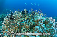 Underwater Coral Reef Seascape Photo - Gary Bell