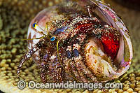 Hermit Crab Photo - Gary Bell