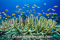 Tropical Fish and Coral photo