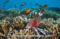 Tropical Reef Scene photo