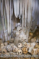 Skulls in Cave Photo - Gary Bell