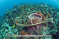 Anchor Damage of Corals Photo - Michael Patrick O'Neill