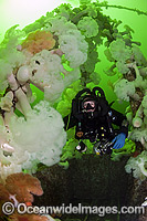 Scuba Diving HMCS Saskatchewan wreck photo