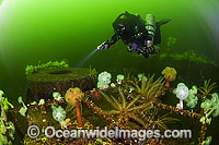 Scuba Diving the Cape Breton wreck photo