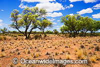 Outback Australia Photo - Gary Bell