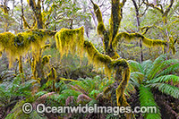 Gondwana Rainforest Photo - Gary Bell