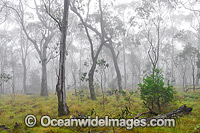 New England National Park Photo - Gary Bell